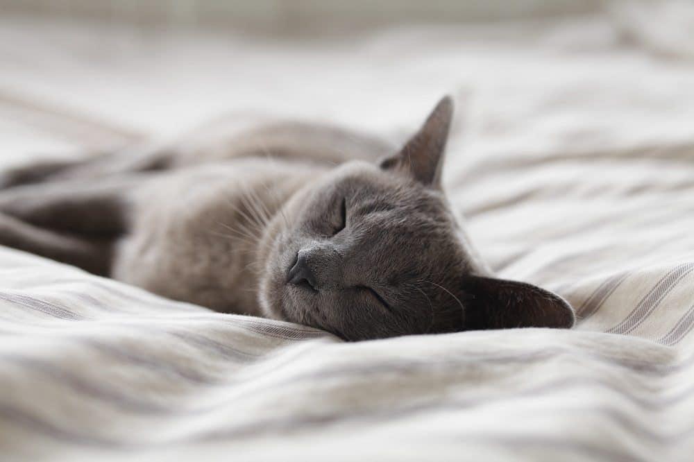 comment mieux dormir malgré le stress